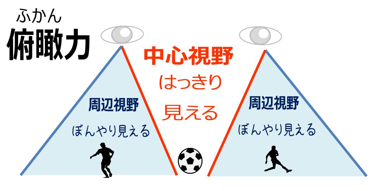俯瞰:俯瞰:中心視野と周辺視野のイメージ図