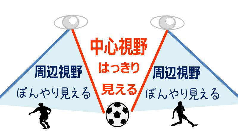 中心視野と周辺視野のイメージ図